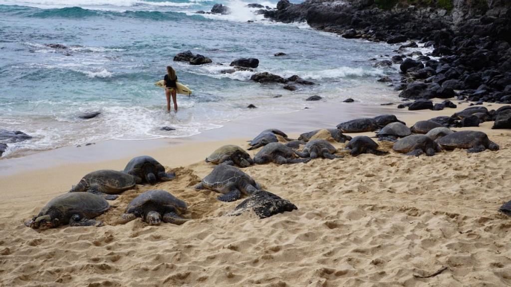 Maui_2015-00333