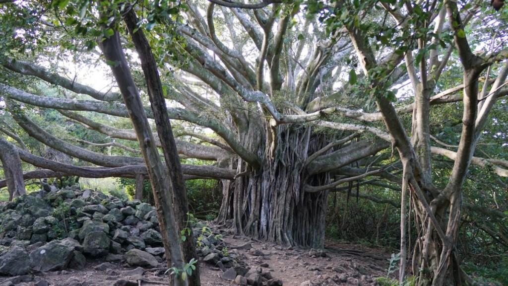 Maui_2015-00595
