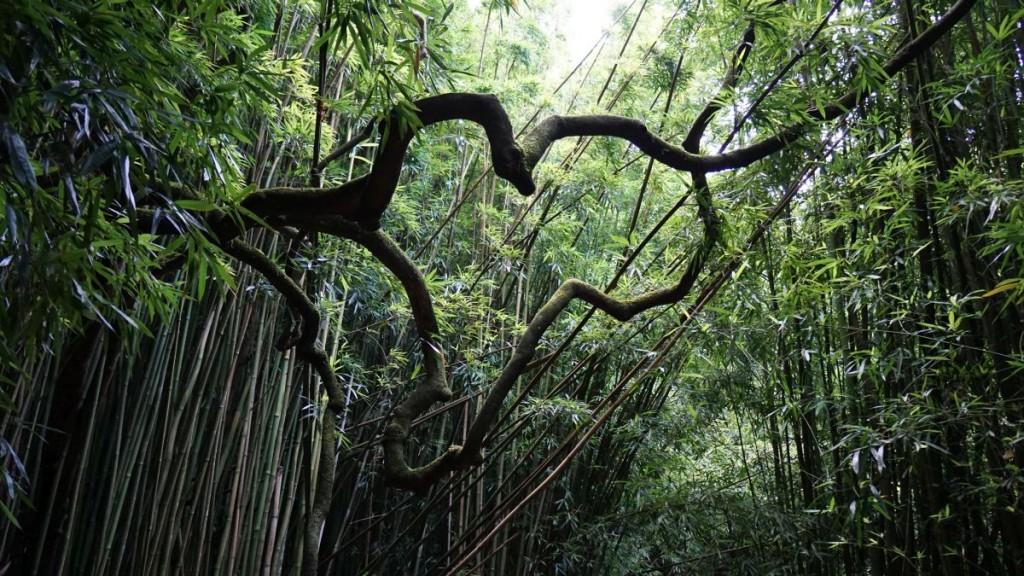 Maui_2015-00625