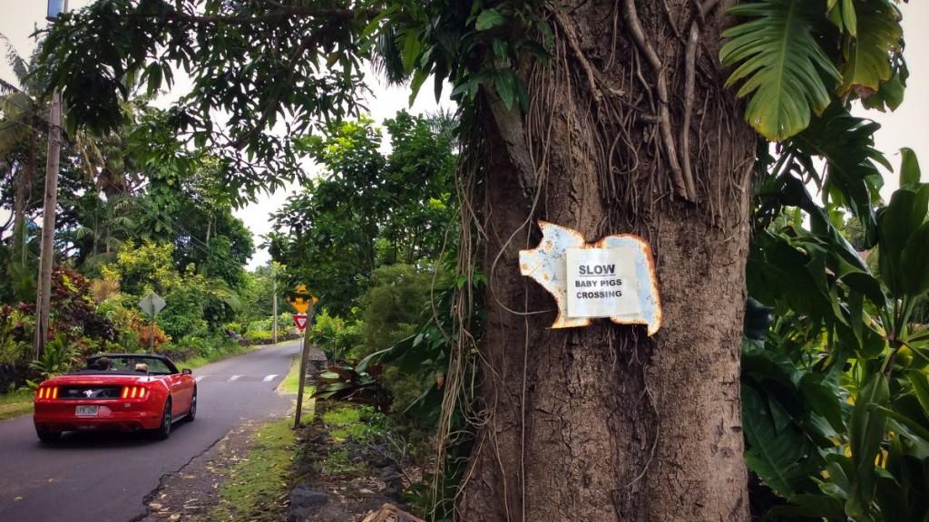 Maui_2015-0309