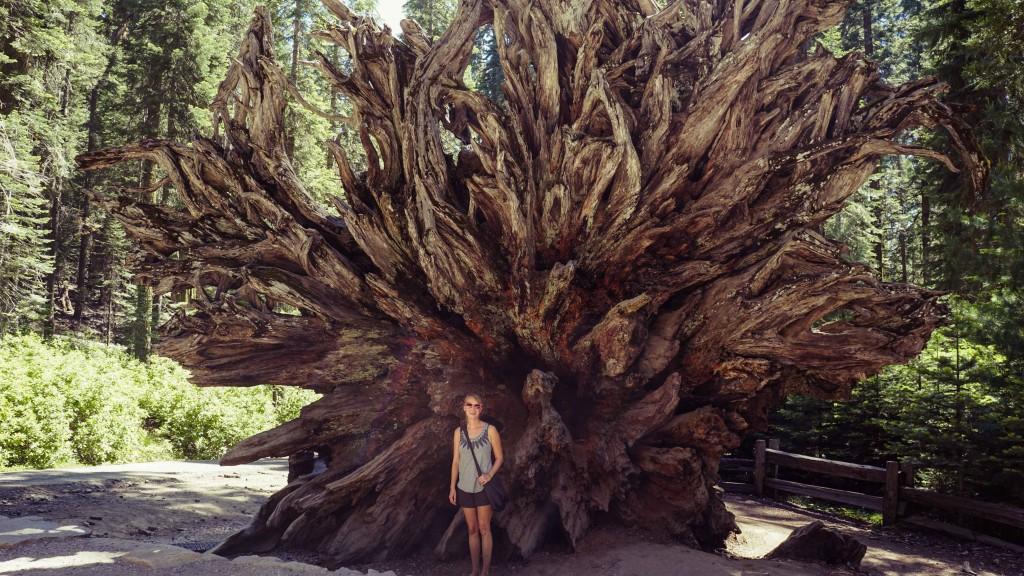Mariposa Grove, Yosemite Natinal Park