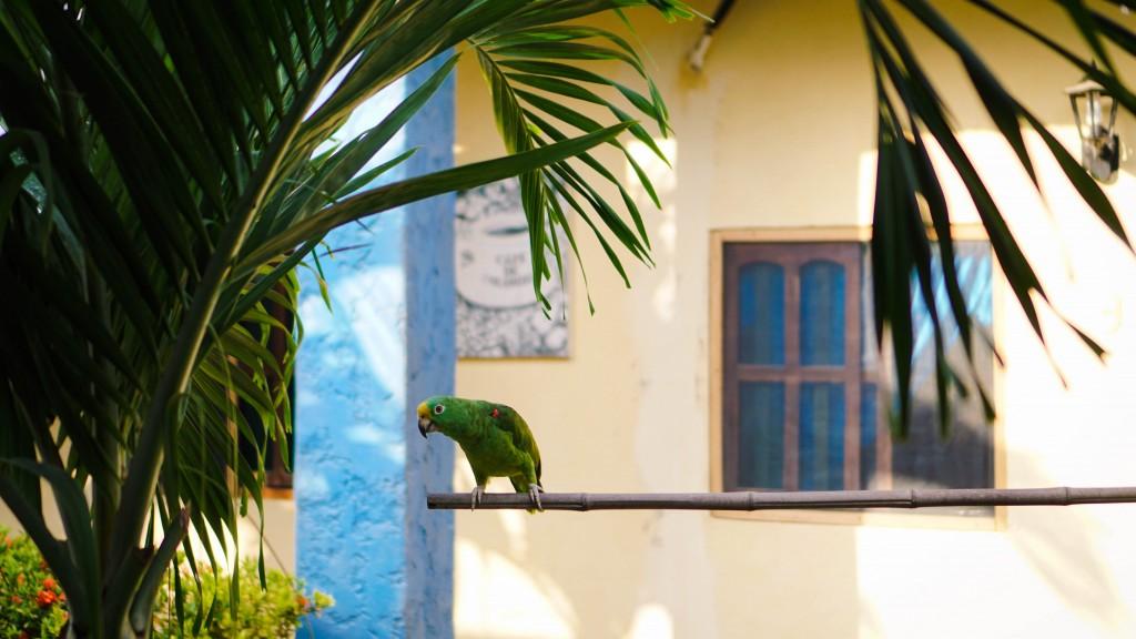 Cartagena, Papagei