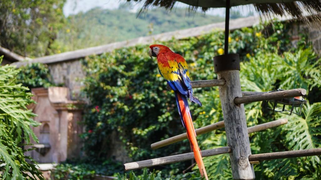 Antigua, Papagei