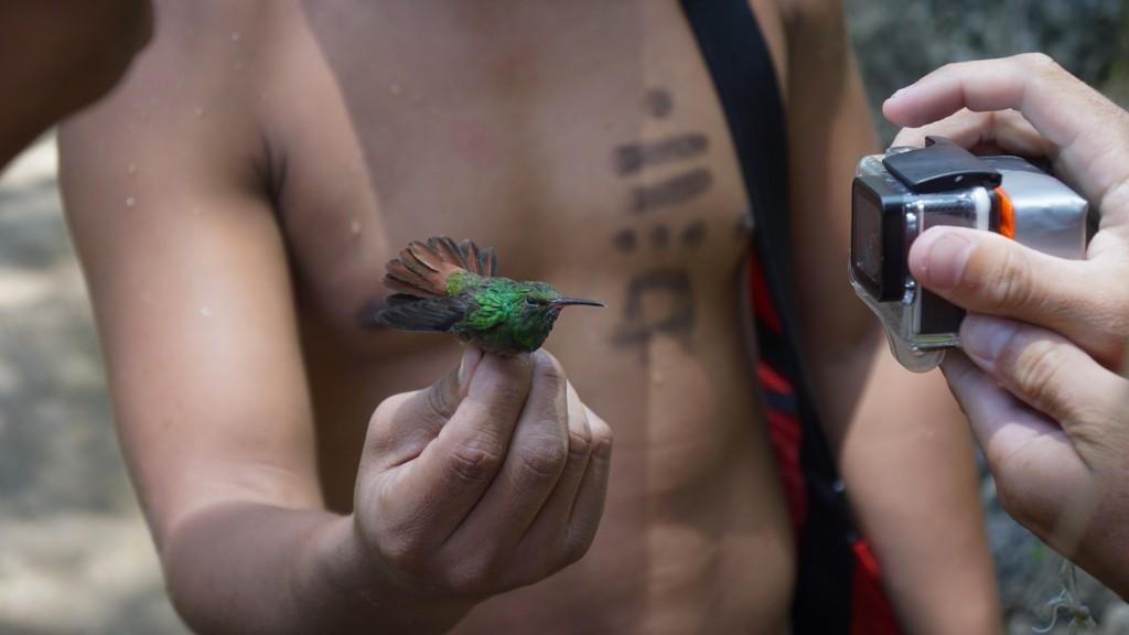 Semuc Champey, Kolibri