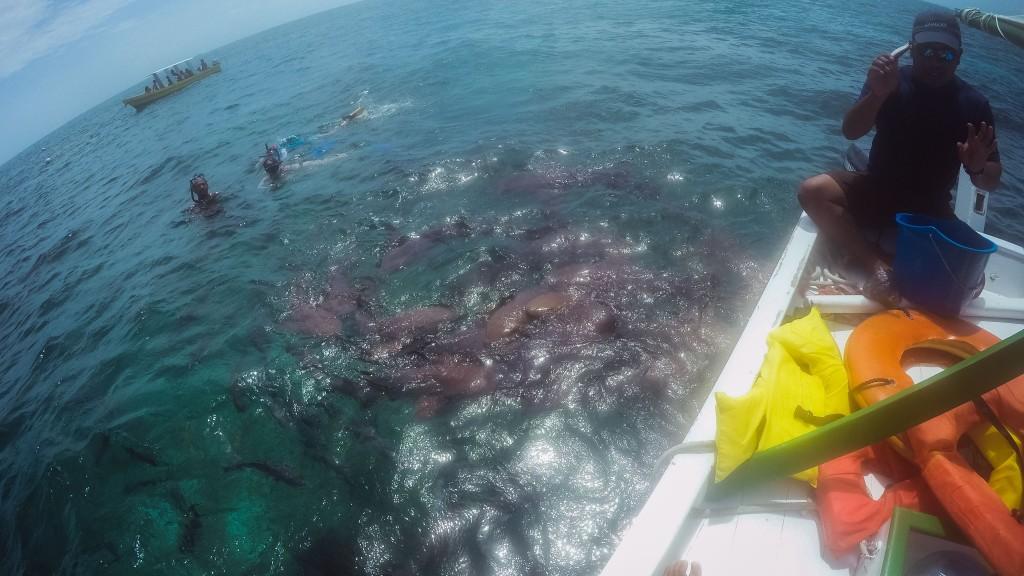 Caye Caulker Schnorcheln mit Haien