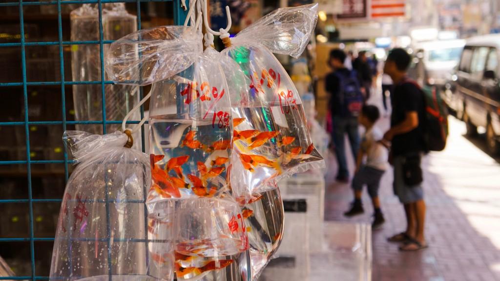 hongkong_2015-08390