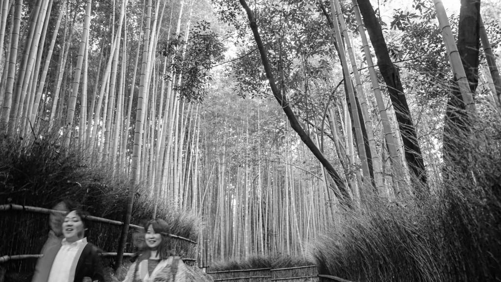 Arashiyama Forest, Kyoto