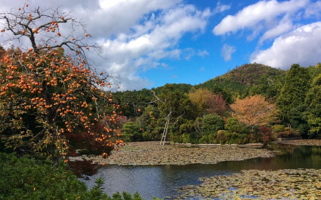 Ryoanji Tempel, Kyoto